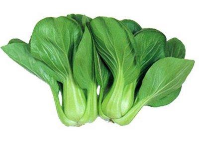 sawi,sawi daging,sawi sendok, tanaman sawi,lmga agro, toko online